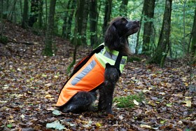 Bild på Pinewood BoarProtec -koiran turvaliivi, 2 XL