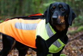 Bild på Pinewood BoarProtec -koiran turvaliivi, 5 XL
