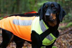 Bild på Pinewood BoarProtec -koiran turvaliivi, S