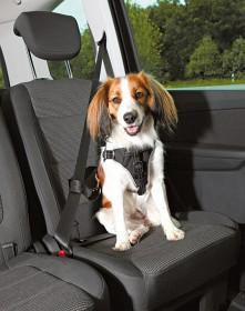 Bild på Trixie Dog Protect -koiran turvavaljaat autoon