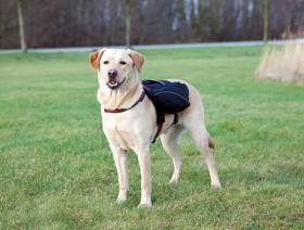 Bild på Trixie -koiran reppu, L-XL, musta